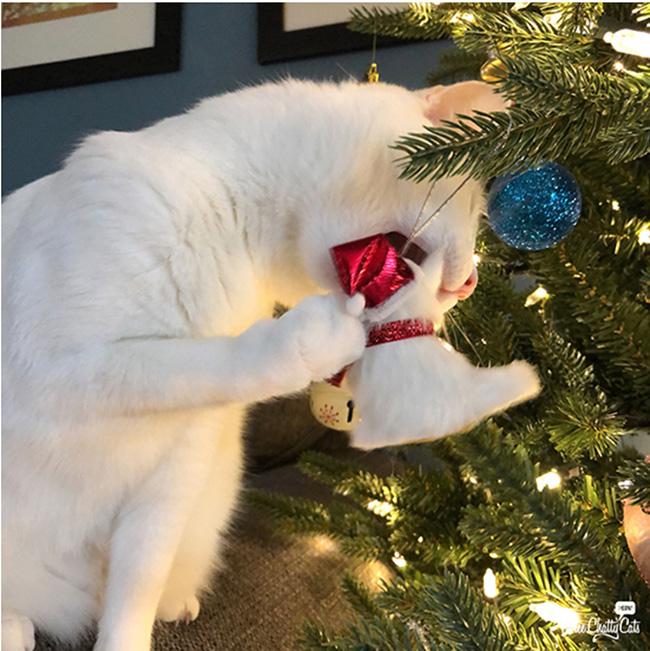 Cat eating ornament