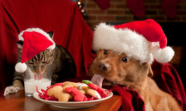 Dog and cat cookie thieves