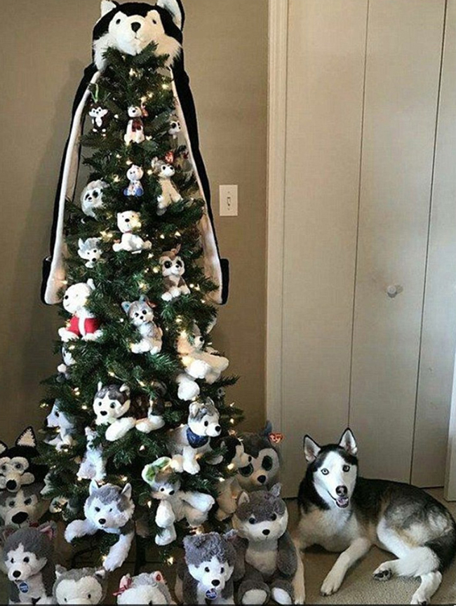 Husky dog with husky Christmas tree