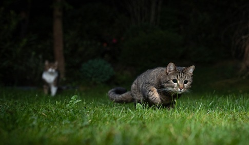 Cats outside at night