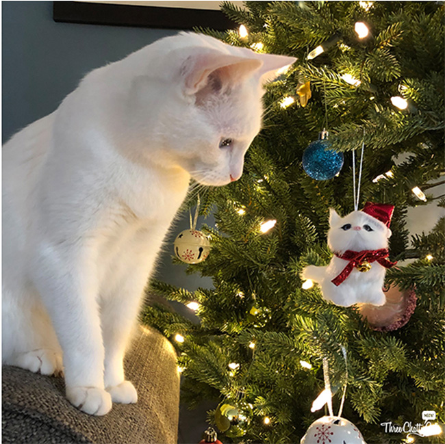 White cat looking at tree