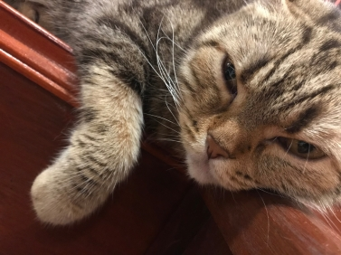 cat relaxed with squinting eyes