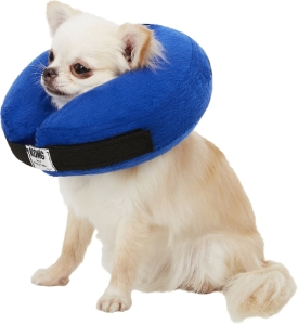 dog wearing inflatable recovery collar
