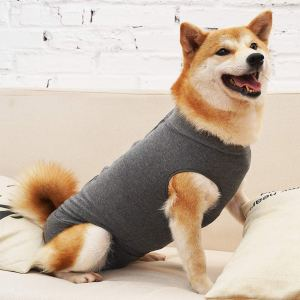 shiba inu dog in gray recovery body suit
