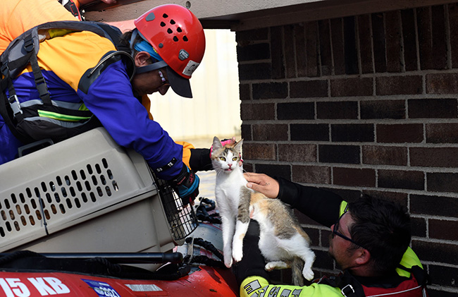 Oklahoma rescuers of pets