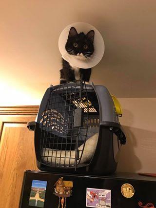 cat in a cone up high