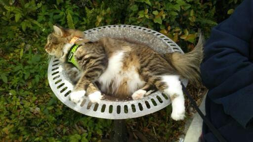 cat in birdbath