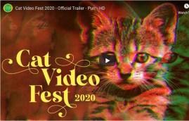 Cat video fest promo screen