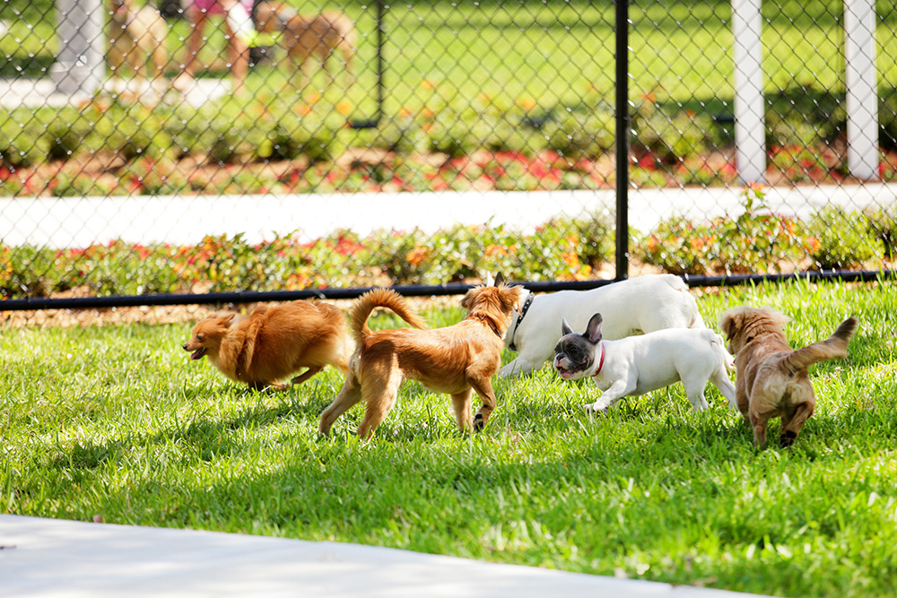 Dog park: Make sure your dog is up to date on vaccinations