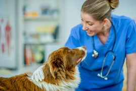 Veterinarian with a cute dog
