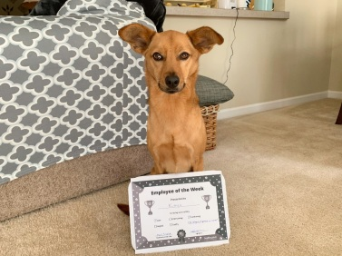 dog with pet of the week award