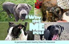 Why Not Me pets for adoption