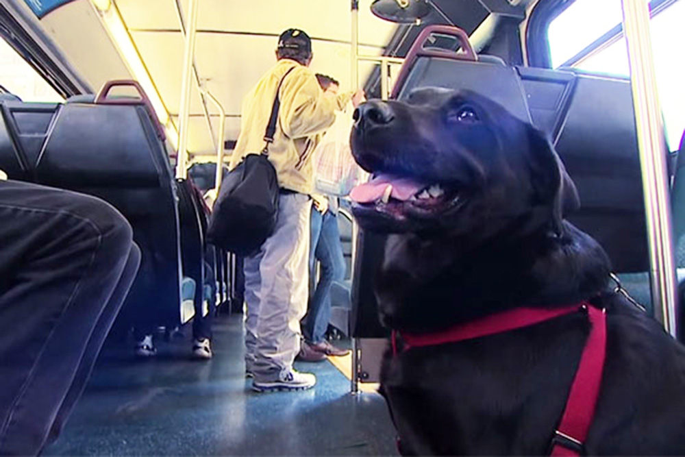 Dog riding the bus