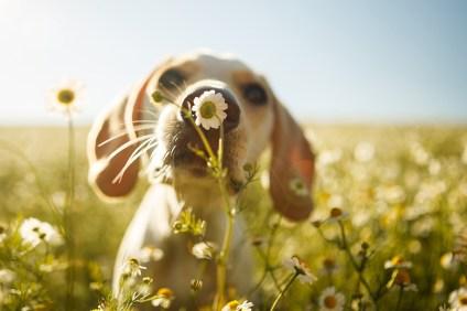Dog smelling a flower
