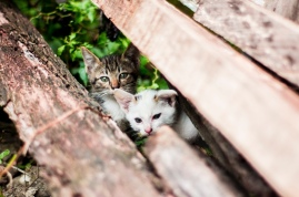 feral kittens hiding behind log