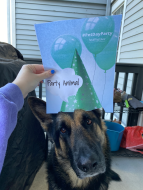 german shepherd dog with party hat