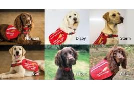 Six dogs being trained to detect Coronavirus