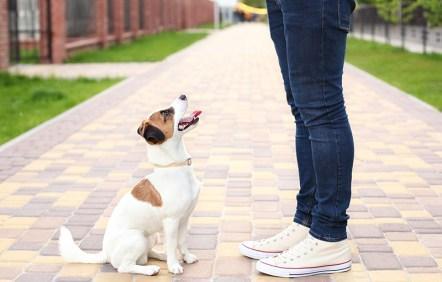 Dog in training