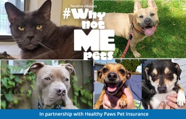 Pets who need a home