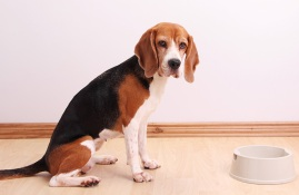 Hungry dog with empty dish