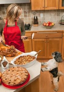 Dog begging in kitchen