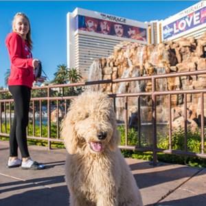 Las Vegas is a dog-friendly city