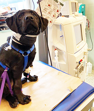 Leo at the vet