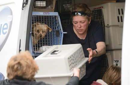 Rescued dogs being unloaded