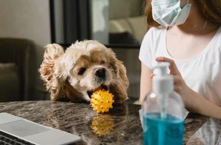 Dog next to hand sanitizer