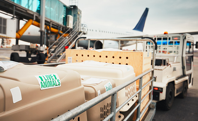 Dog crate loaded on a plane