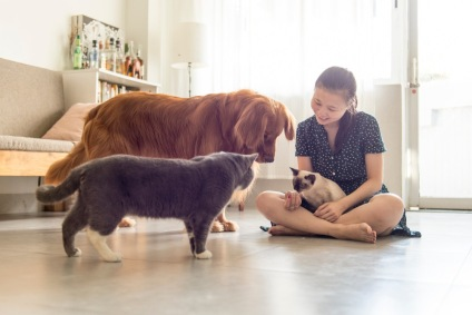 girl with cats and dog