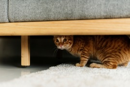 stressed cat hiding under couch