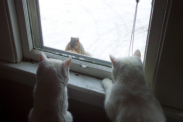 cat squirrels