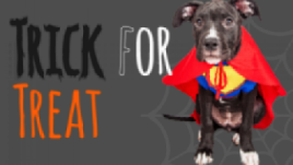 healthy paws trick or treat