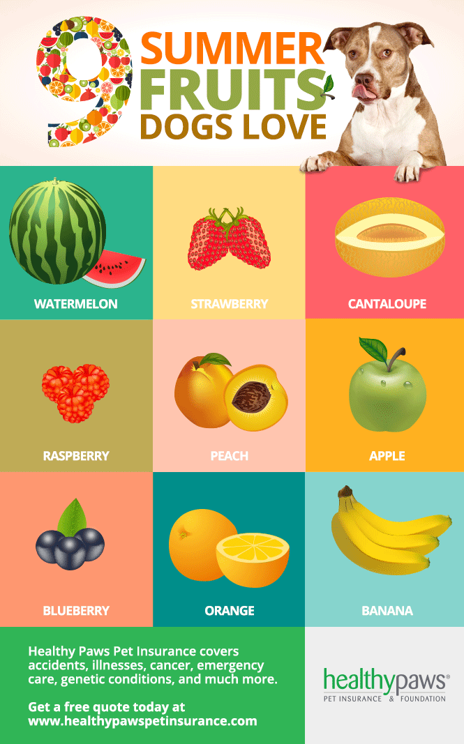 All Fruits That Dogs Can Eat