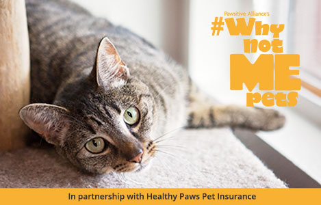 healthy pets insurance
