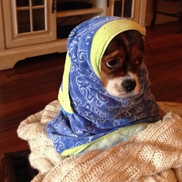 dog bath funny