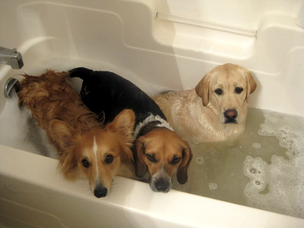Healthy Paws Pet Insurance Reviews >> 10 Dogs Who Felt Betrayed at Bath Time