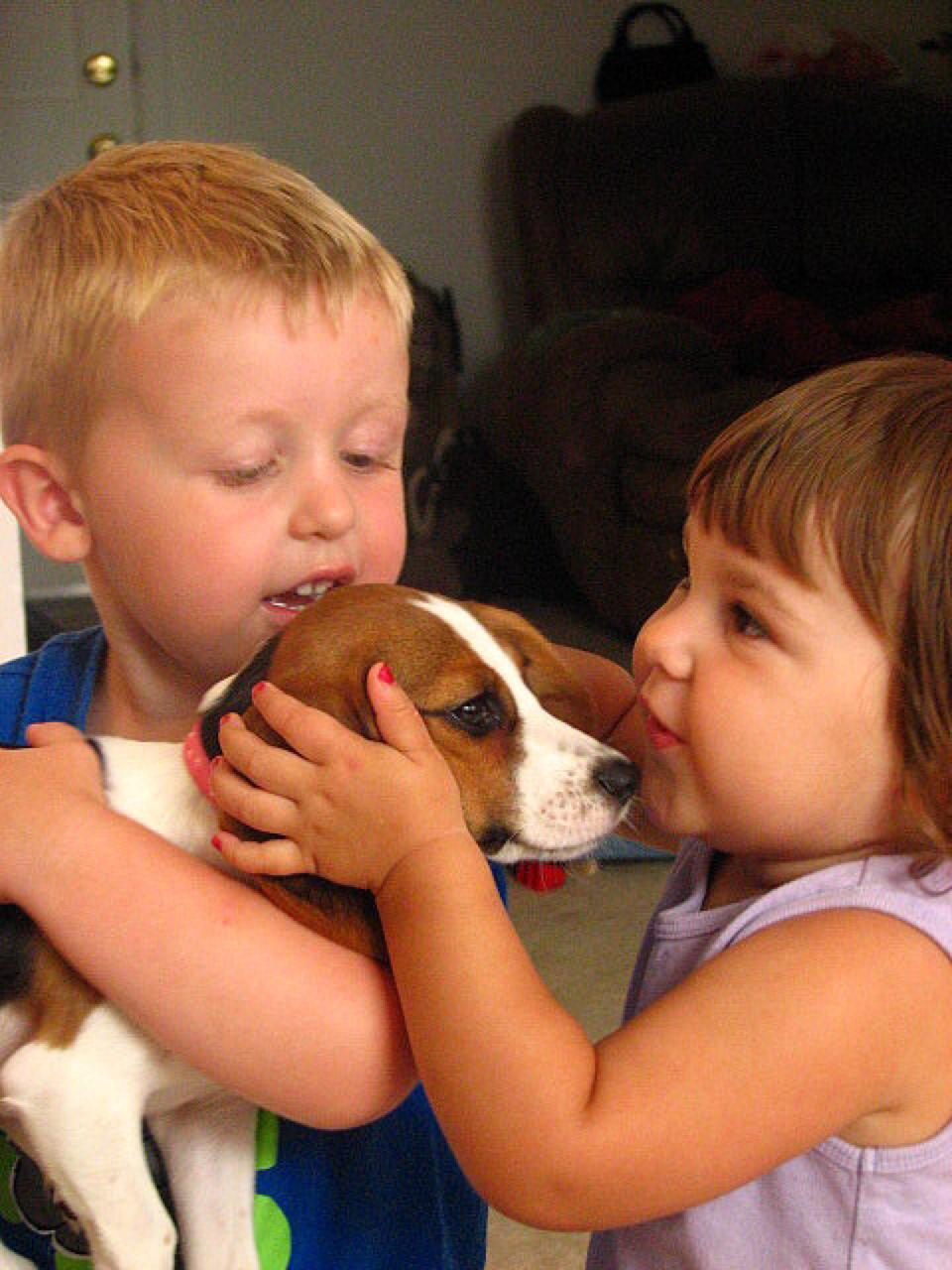 Beagle best dog breeds for kids