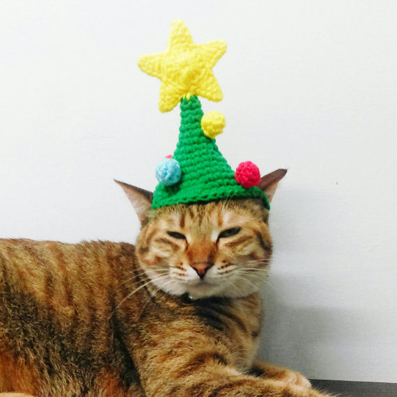 cat Christmas hat