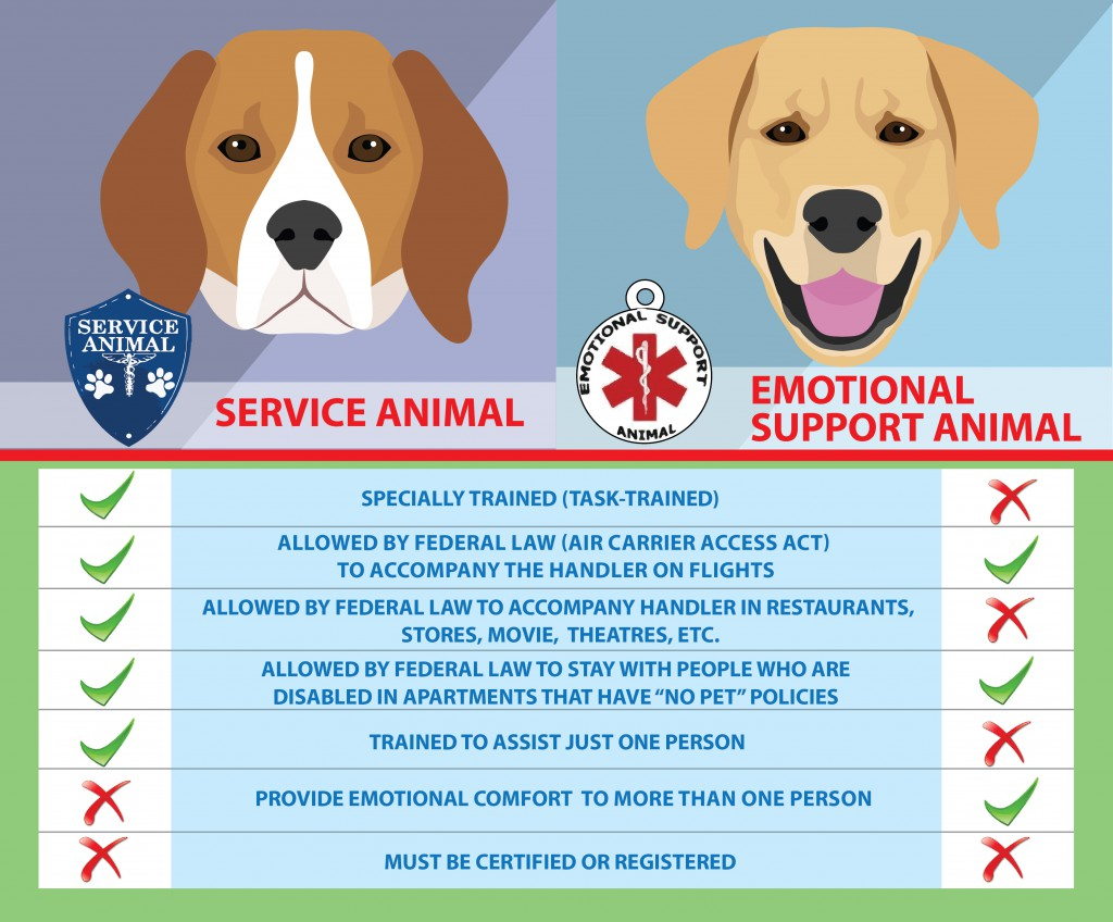 Image of: Landlord Servicedogvest Healthy Paws Pet Insurance Service Dogs Vs Emotional Support Animals Healthy Paws