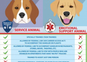 Difference Between Service Dog and Emotional Support Animal