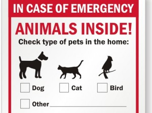 earthquake, pet safety tips