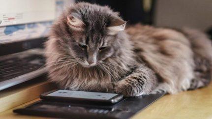 donate animal shelter online