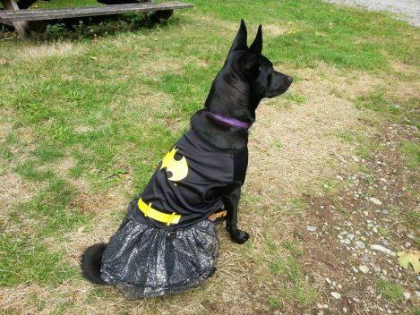 bat girl dog
