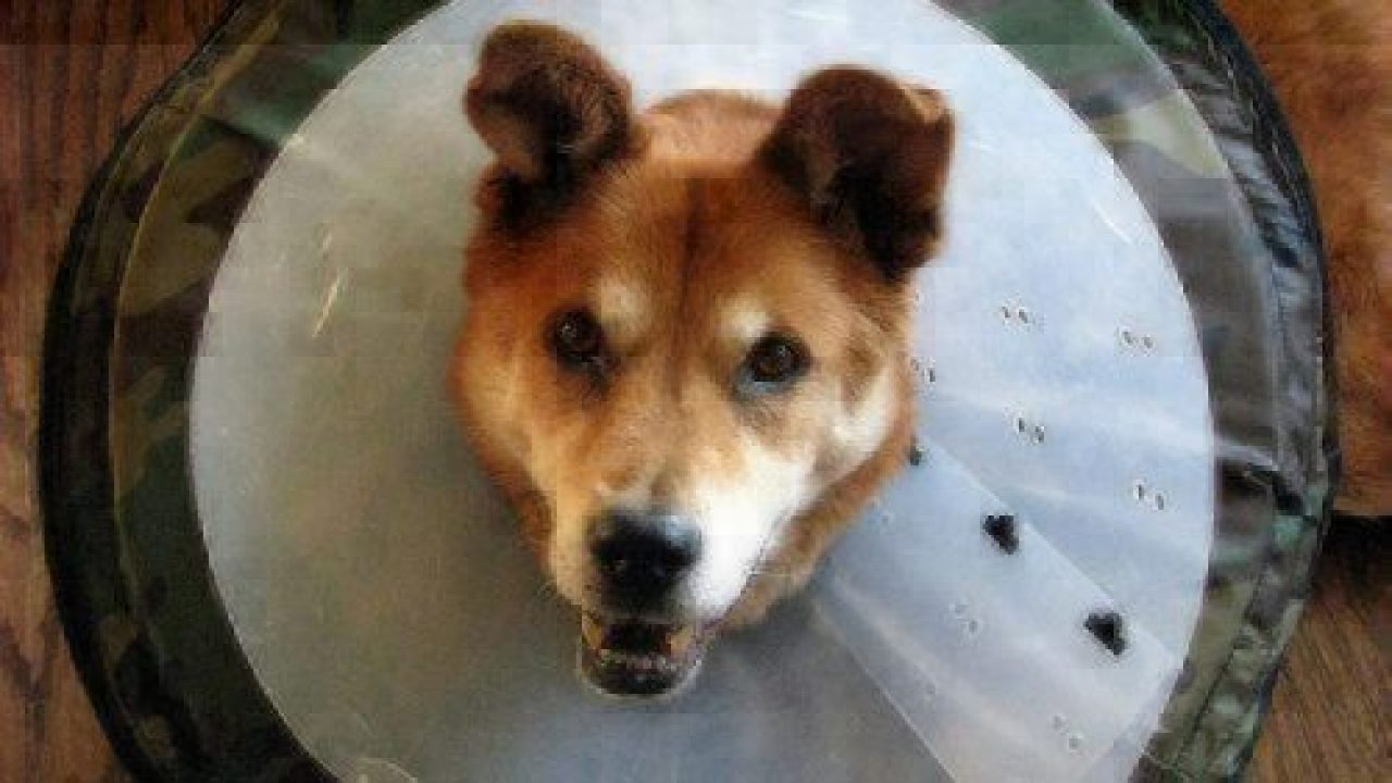 Hot Spots On Dogs Healthy Paws