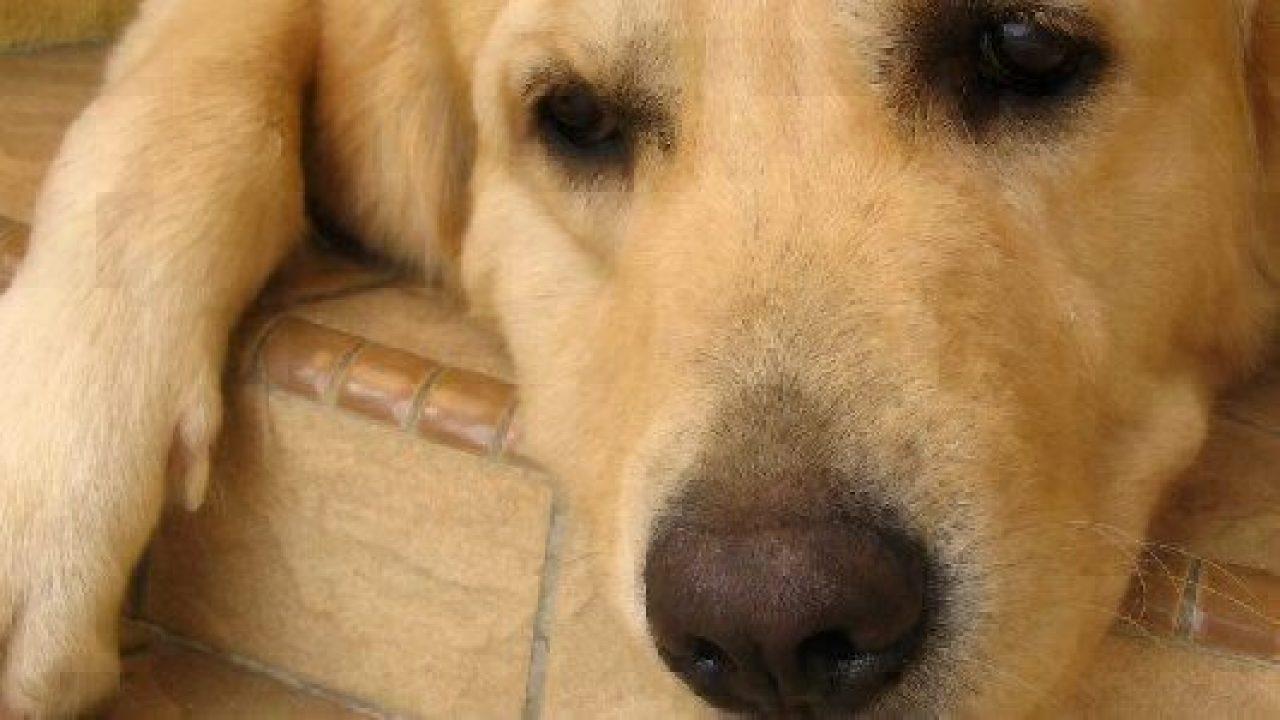 Do Dogs Get E Coli