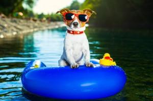 dog sun,pet summer fun