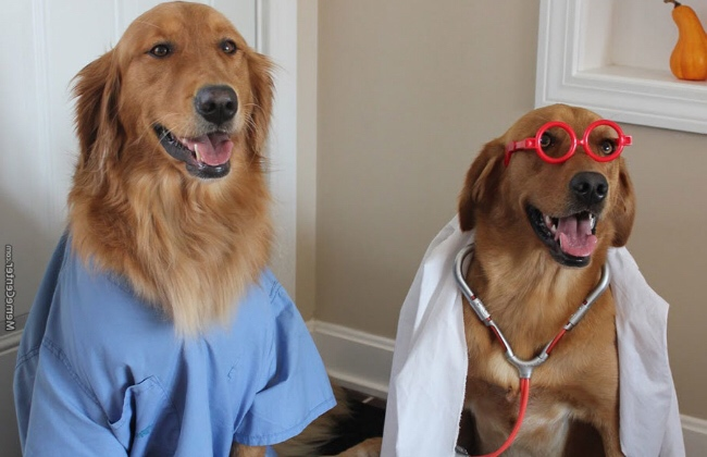 two dogs, one dressed as a doctor and the other as a patient.