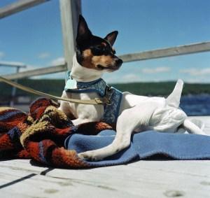 doggie diaper